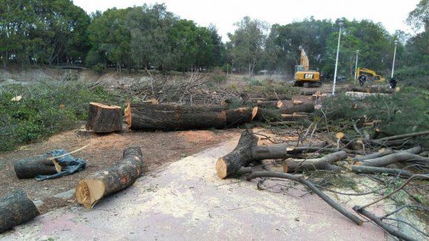 Derribaron árboles en el Dean