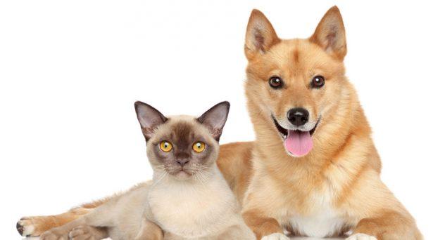 Zapopan esteriliza a más de 700 perros y gatos