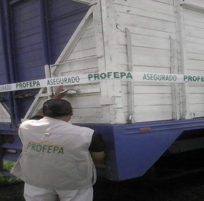 Asegura Profepa madera ilegal en Sayula