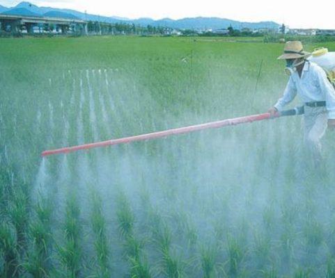 México debe producir sus propios combustibles y agroquímicos: Cimej