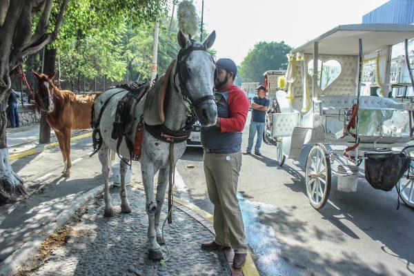 """Que se queden las """"calandrias con los caballos"""" piden historiadores y organismos de la SC"""