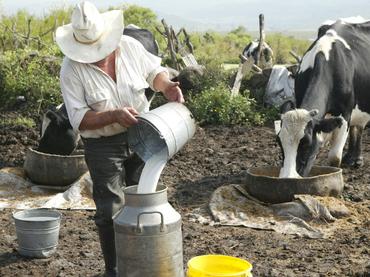 Productores de leche de México y Canadá en contra de negociar el TLCAN