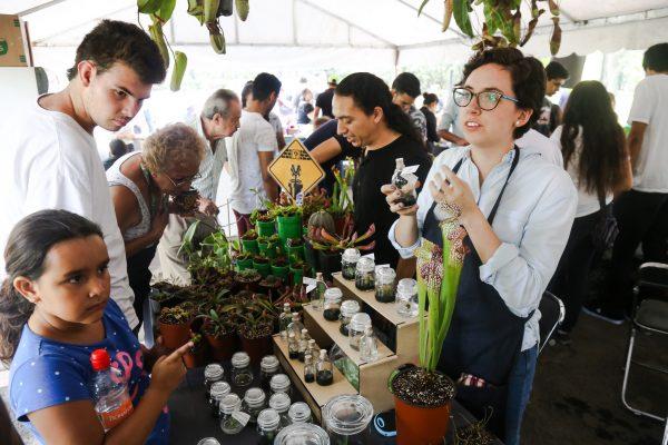 Desde orquídeas, cactus y hasta carnívoras se pueden encontrar en el segundo Festival Botánico