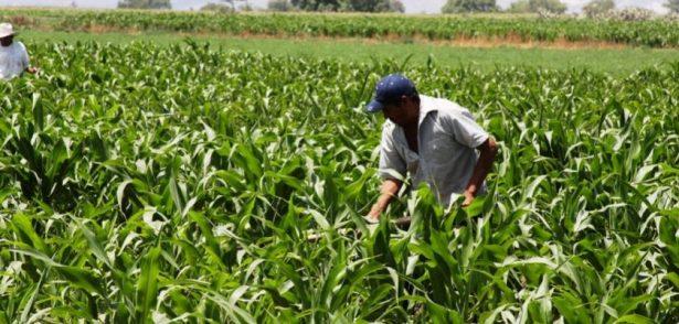 Continúa Jalisco como líder en agricultura por contrato