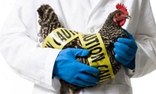 Contenida la gripe aviar en Jalisco: Javier Guízar M