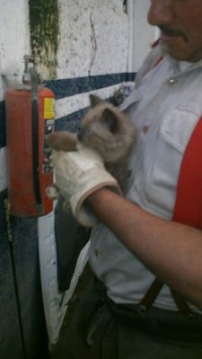 [Video] Luego de cuatro horas bomberos rescatan a un gato en taller de Guadalajara