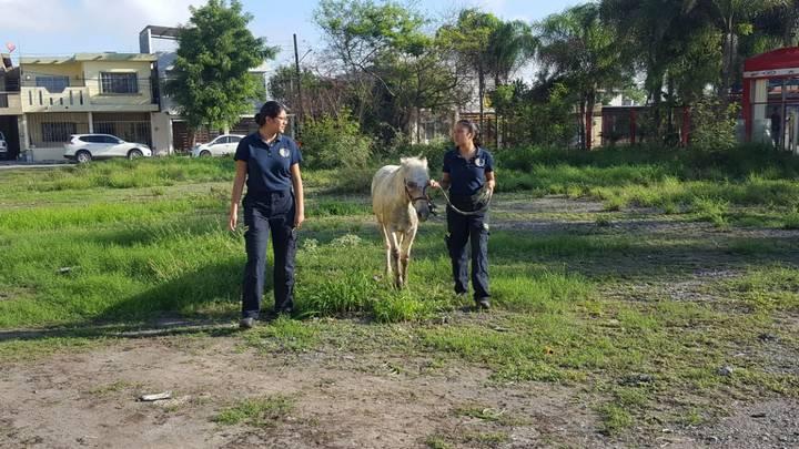 caballo03