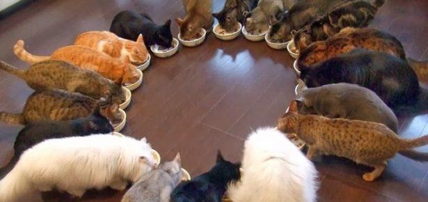 La loca de los gatos (o perros, según sea el gusto)