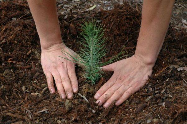 Más de 726 mil árboles han plantado en Zapopan