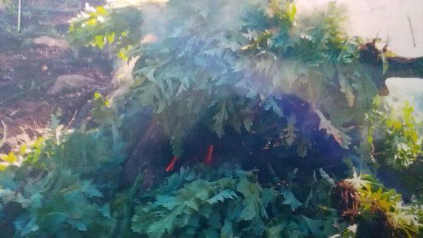Destruyen más de 214 mil plantas de amapola en Autlán de Navarro