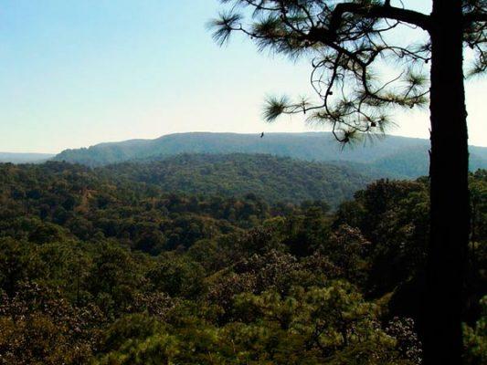 Llaman al cuidado de los bosques