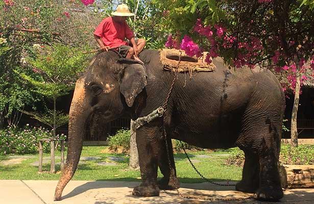 Muere joven al tratar de tomarse una selfie con un elefante