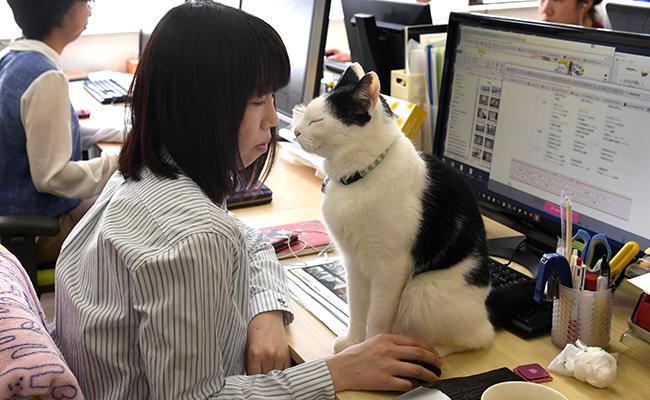 Llevan gatos al trabajo para combatir estrés