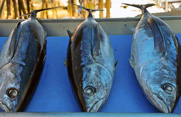 OMC autoriza a México imponer sanciones a EU en disputa de atún