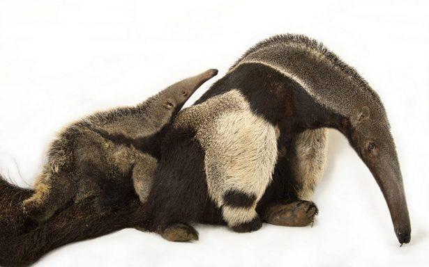 Becas a favor de la preservación de especies