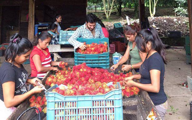Rambutaneros de Chiapas, en su peor crisis