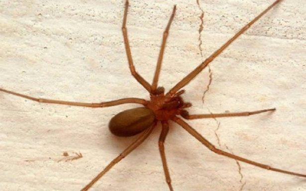 ¿Vomitaste luego de que una araña te picó? Cuidado, puede ser muy peligroso