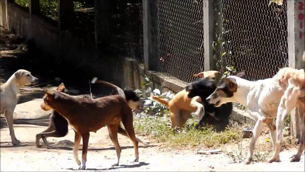 Construirán Centro de Control Animal en Acapulco