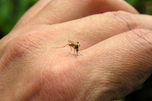 A la baja enfermedades como dengue, zika y chikungunya en Zihua: Salud