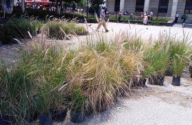 Por error humano se secan las plantas en la plaza cívica Primer Congreso de Anáhuac