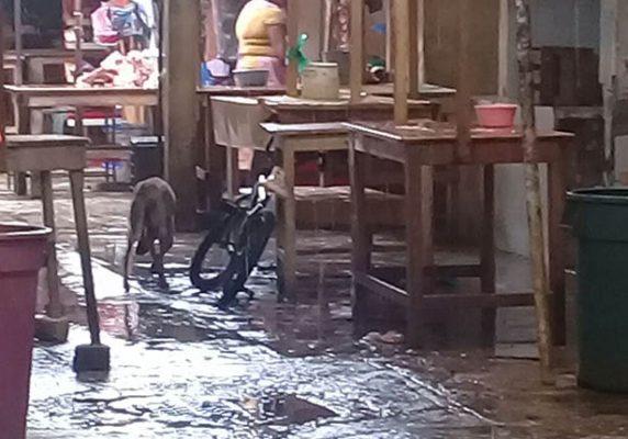 Problemas de salud generan perros callejeros en el mercado de San Marcos