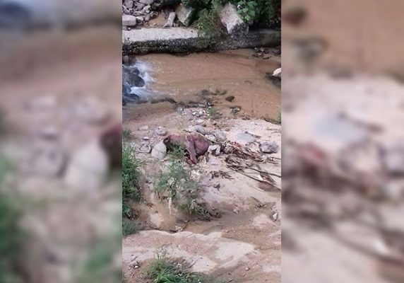 Muere caballo que era utilizado para calandria