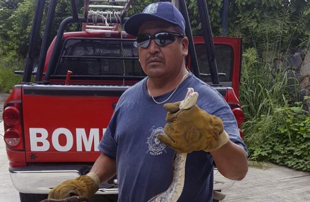 Capturan boa en zona hotelera de Ixtapa