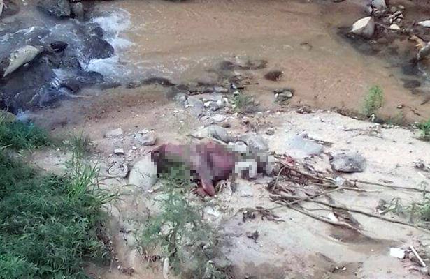 Encuentran caballo muerto en canal pluvial cerca de la Diana de Acapulco