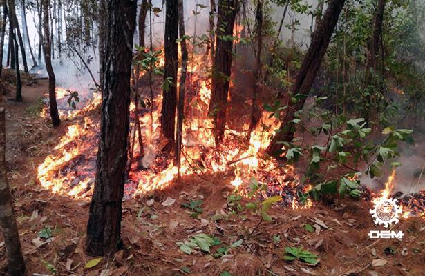 Incendios han consumido más de 600 hectáreas de pastizales