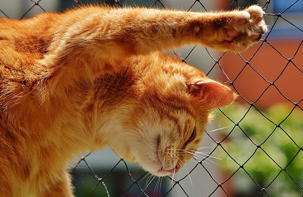 Gatos se devoran entre ellos por abandono de su dueña