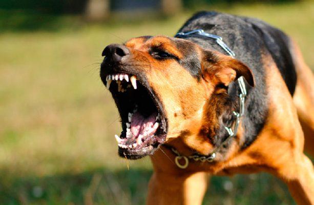 Amenazas, corretizas y mordidas de perros enfrenta personal electoral del Edomex