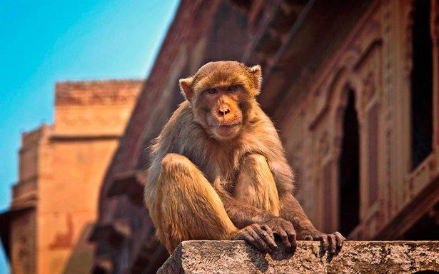 Muere bebé secuestrado por un mono: lo hallan en un pozo