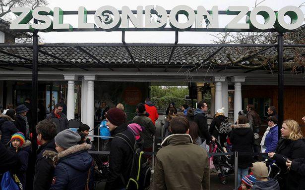 Tras devastador incendio, Zoológico de Londres reabre sus puertas
