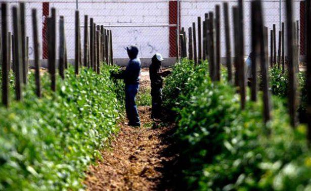 México registró crecimiento de 5.8 por ciento en agricultura durante 2016