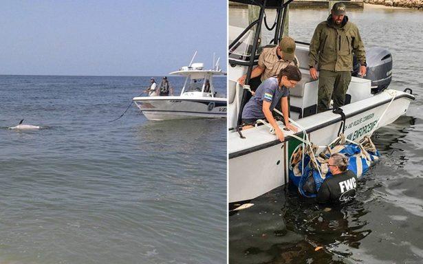 Tóxica marea roja amenaza a fauna de Florida: mueren nueve delfines