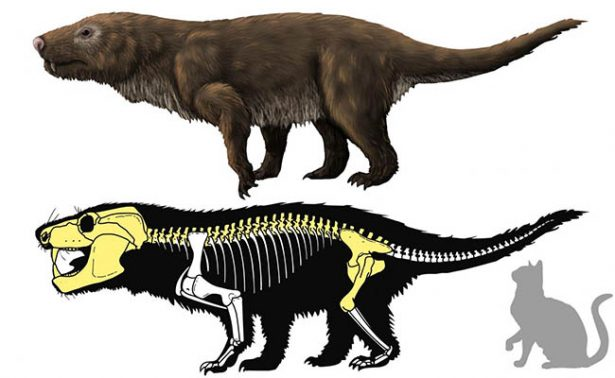 Hallan en Brasil fósiles de primera especie de reptil mamiferoide no africano