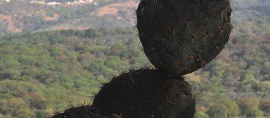 Cuenta Guanajuato con 23 áreas naturales protegidas