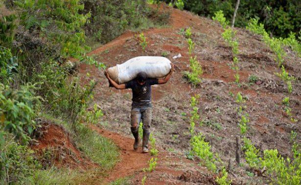 Pacto con FARC impulsó cultivo de coca, reconoce Colombia