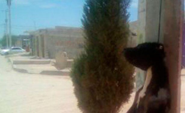 No cesa crueldad: cuelgan a un perro de poste