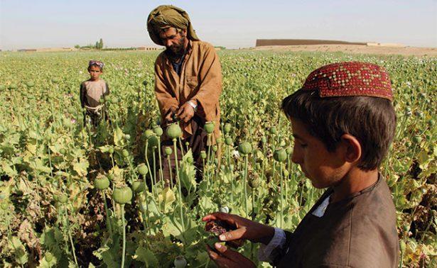 Talibanes controlan producción de heroína, abastecen 80% del consumo