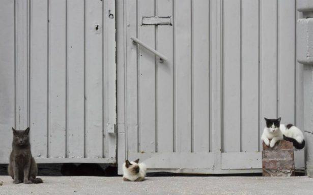 Rescatan a más de 60 gatos de albergue en Cancún