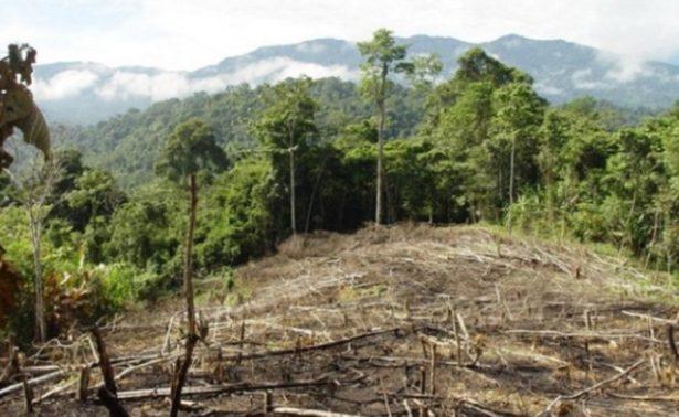 Denuncia PVEM pérdida de bosques en Chiapas