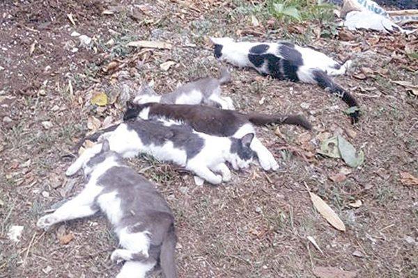 Indigna matanza de felinos
