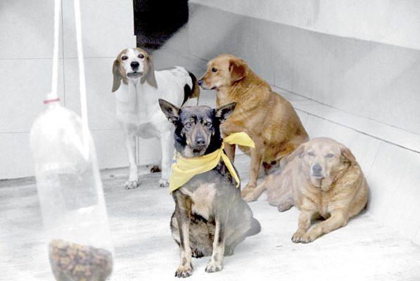 Van más de 138 ataques de perros en Córdoba