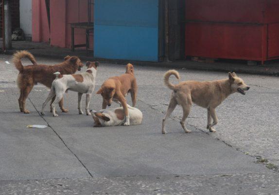 Denuncias por maltrato animal no prosperan; agresiones, en aumento