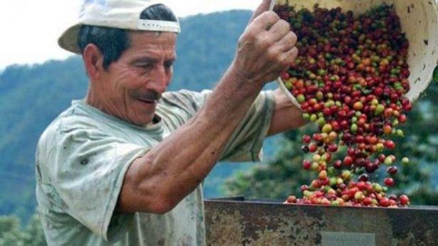 Cafetaleros solicitan más de mil 200 millones de pesos