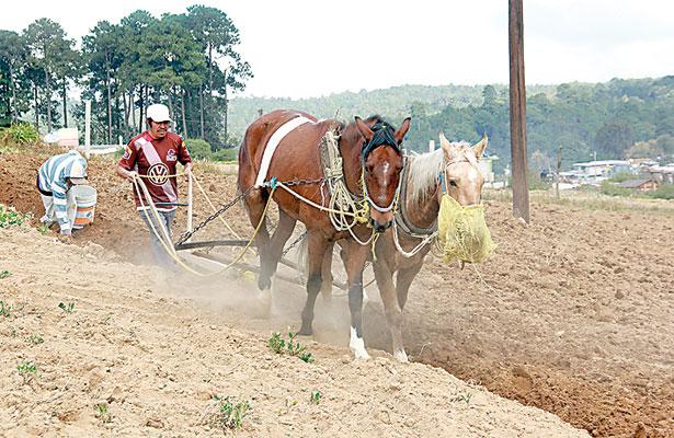 Antes robaban vacas; ahora… caballos, denuncian ganaderos