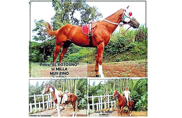 Alcalde de Tlacotepec puso en venta tres caballos de carreras
