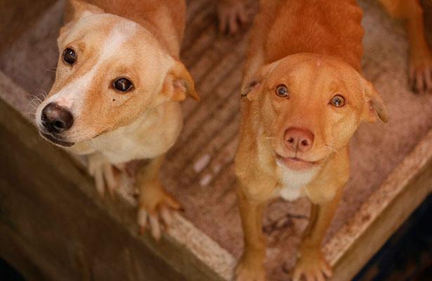 Perros abandonados se comen entre ellos