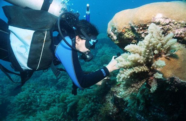 Lancheros lucran y ponen en riesgo manglares y arrecifes, acusan